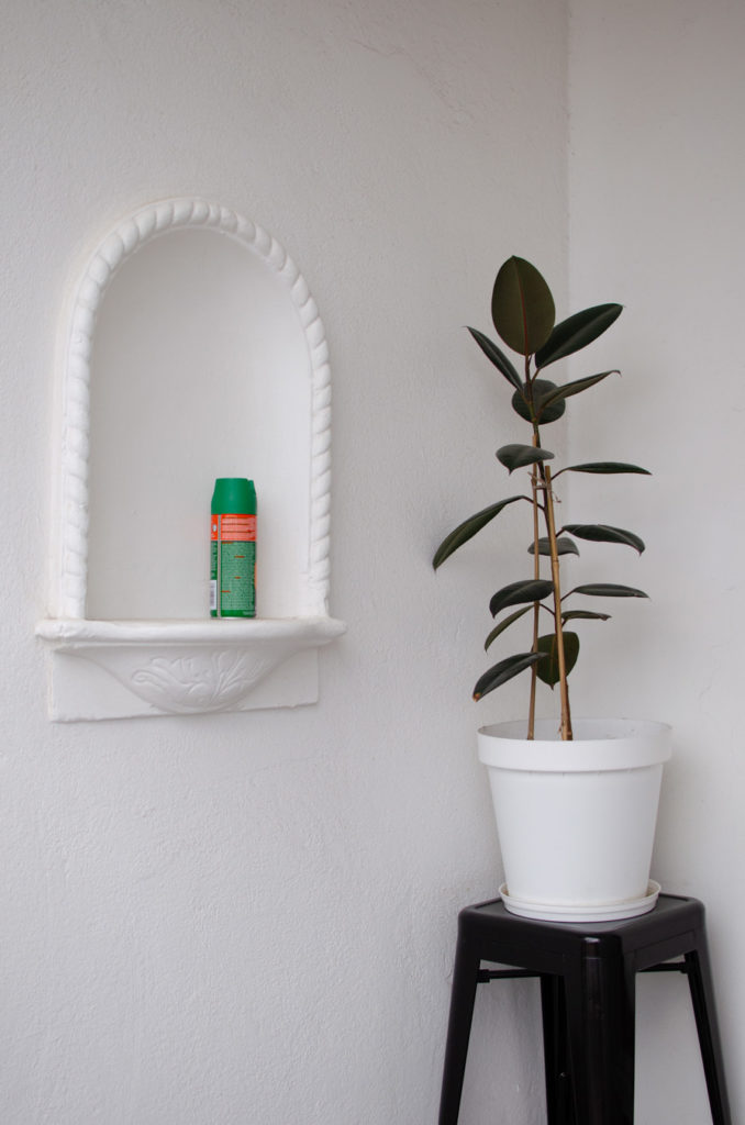 House Grosvenor plant